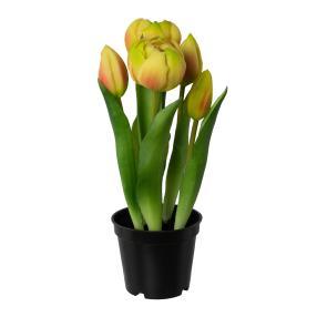 Tulpen gefüllt gelb 25cm