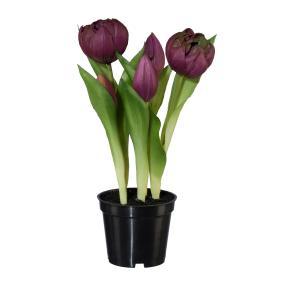 Tulpen gefüllt lila, ca. 25 cm