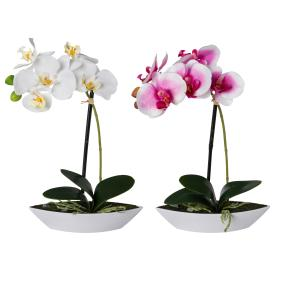 Orchidee weiß-rosé im Schiffchen 2-teilig