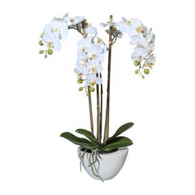 Mini-Phalaenopsis weiß 51cm