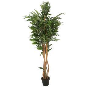 Ficus Naturstamm 150cm