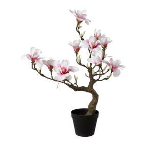 Magnolienbaum rosa 71cm