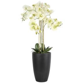XXL-Orchidee ca. 105 cm, beige-grün