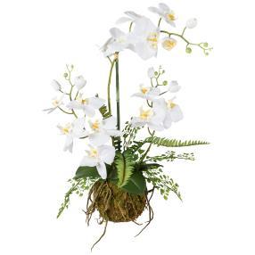 Orchideen-Farn-Arrangement 55cm weiß