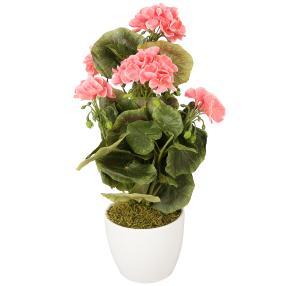 Geranienbusch 40 cm, rosa