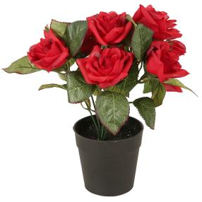 Rosenbusch 24cm rot im Kunststofftopf