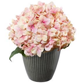 Hortensie rosa im Metalltopf