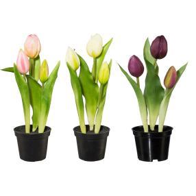 Tulpen 3er-Set rosa-weiß-lila