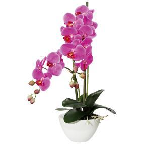 Orchidee 50 cm, fuchisa, inkl. Keramiktopf