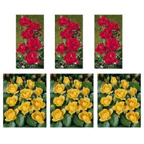 6er Reichblühendes Rosenbeet