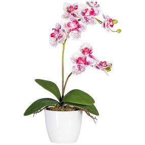 Orchidee weiß-fuchsia, ca. 60 cm