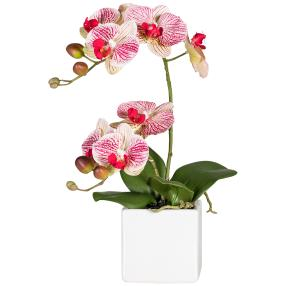 Orchidee im Topf, rot-weiß, 45 cm