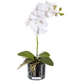 Orchidee im Glas, weiß, ca. 40 cm