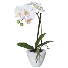 Orchidee im Keramiktopf 36 cm, weiß