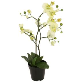 Orchidee hellgrün, 75 cm, real-touch