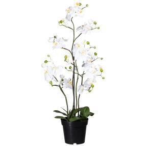 XL-Orchidee weiß, 90 cm