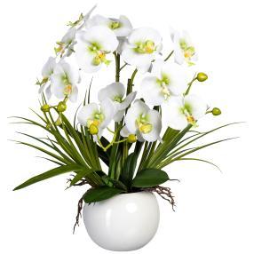 Orchidee weiß-grün, inkl. Keramiktopf, 58 cm
