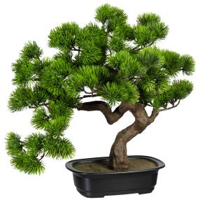 Bonsai Kiefer im Topf, 40 cm
