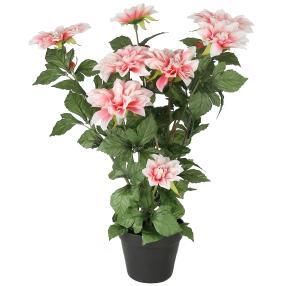 Dahlie rosa, ca. 65 cm