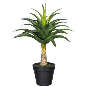 Aloe mit Stamm, 45,cm