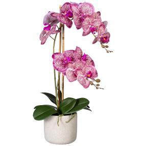Orchidee im Keramiktopf, pink-creme, real-touch