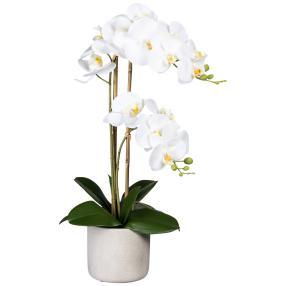 Orchidee im Zementtopf weiß 60cm real-touch