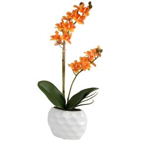 Mini-Phalaenopsis orange, real-touch