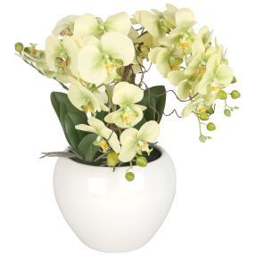 XXL-Orchidee real-touch, hellgrün, 56 cm