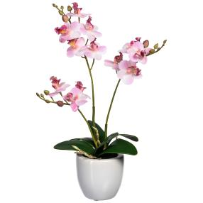 Mini-Phalaenopsis rosa, real-touch