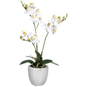 Mini-Phalaenopsis weiß, real-touch