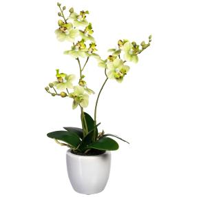 Mini-Phalaenopsis grün, real-touch
