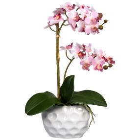 Mini-Phalaenopsis rosa, im Keramiktopf, real-touch