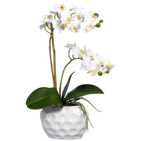 Mini-Phalaenopsis weiß, mit Topf, real-touch