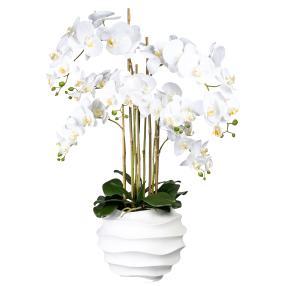 XXL-Orchidee weiß, 95 cm, inkl. Topf
