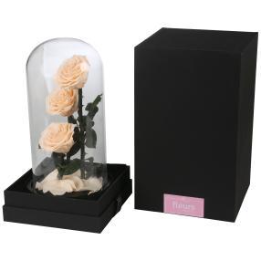 Glaskuppel mit Rosen, apricot