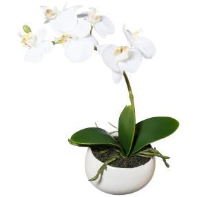 Orchidee weiß, 23 cm, in Keramikschale