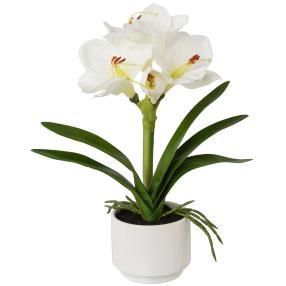 Amaryllis weiß, 33 cm, im Keramiktopf