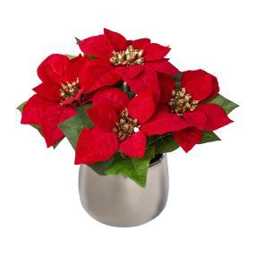 Weihnachtsstern rot, im Silbertopf