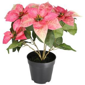 Weihnachtsstern rosa, 47 cm