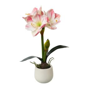 Amaryllis rosa im Keramiktopf, 50 cm