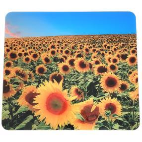 Multi-Platte Sonnenblumenfeld