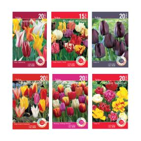 6er Pack Tulpen Attraktiv