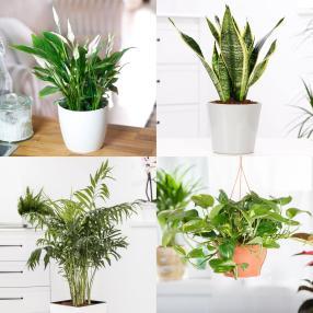 Zimmerpflanzen Luftreiniger 4er-Set