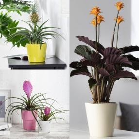 Exotisches Zimmerpflanzen 3er-Set