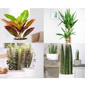Zimmerpflanzen Sonnenplatz 4er-Set