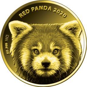 Goldklassiker Kleiner Panda