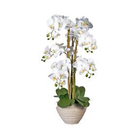 XL-Orchidee weiß im Keramiktopf 80cm-90cm