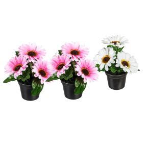 Gerbera rosa-weiß 3er-Set