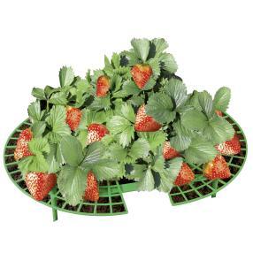 WENKO Erdbeer-Reifer, 15er Set