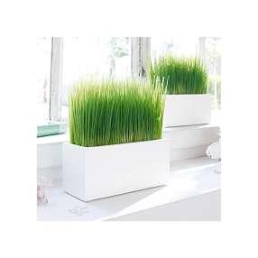 Kunstpflanze Gras